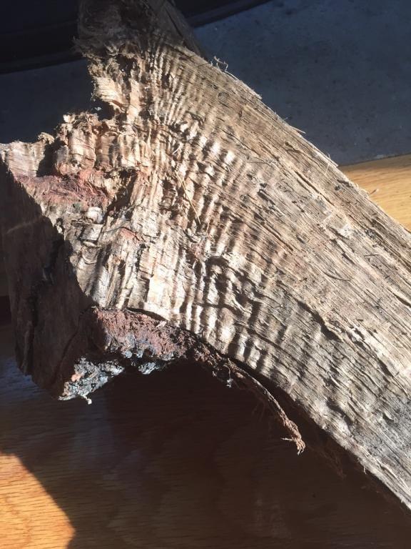 curly firewood.JPG