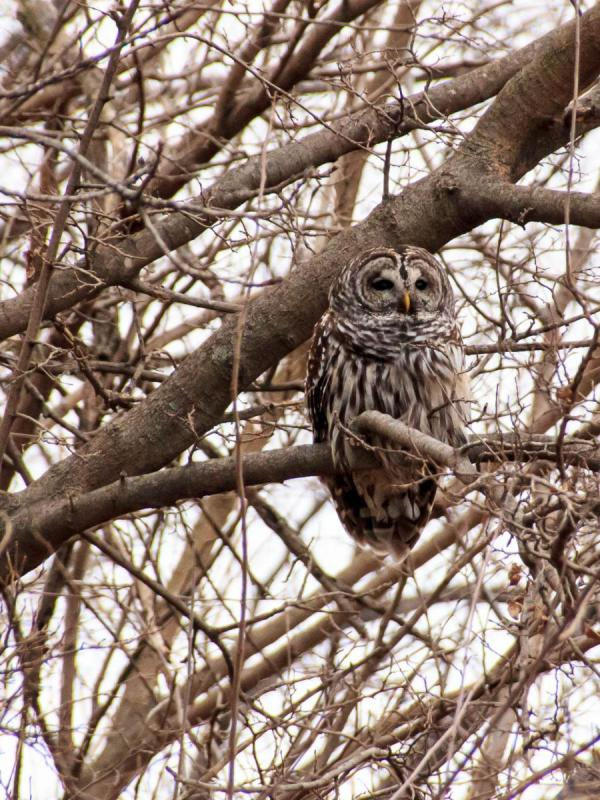1612_Owl_007.jpg