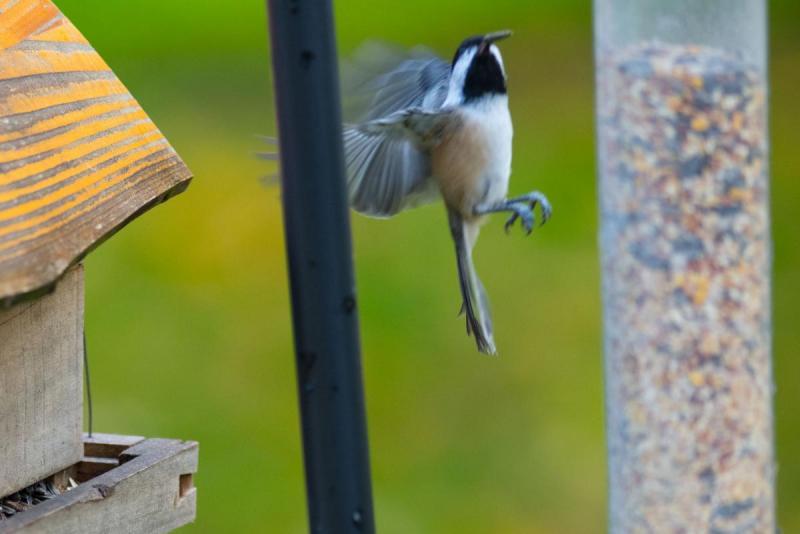 1867888420_Birds015Share.thumb.jpg.ca08aae4cc0026a38fc7416050c6da4a.jpg