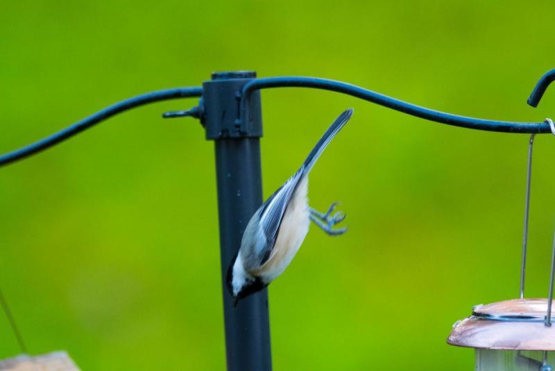 372803754_Birds008Share.thumb.jpg.5aaebfed53e1eed07786f54641514191.jpg