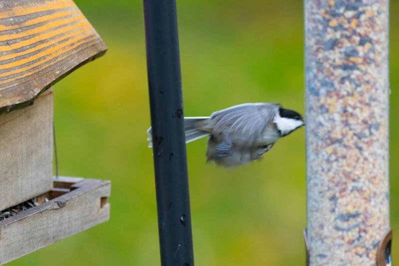 664022733_Birds014Share.thumb.jpg.255c40558333857f8b8fd0be17c38b27.jpg