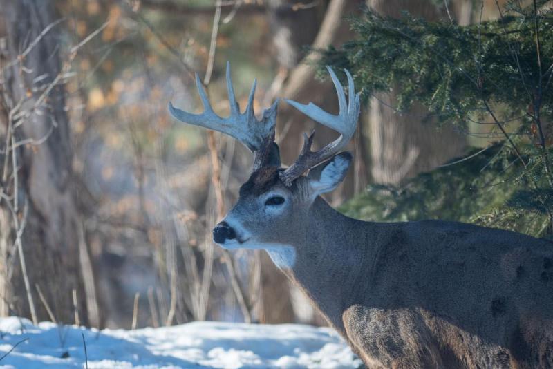 Deer 008 Share.jpg