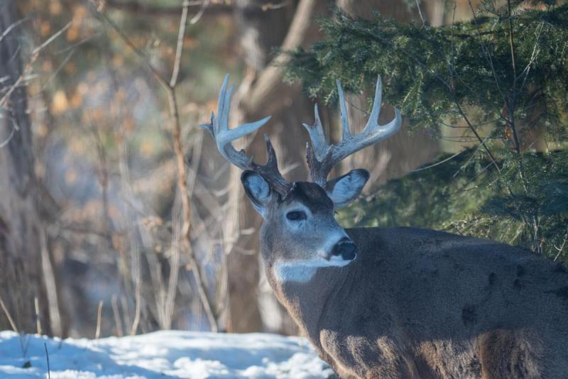 Deer 006 Share.jpg