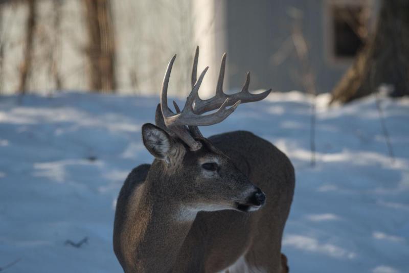 Deer 003-2 Share.jpg