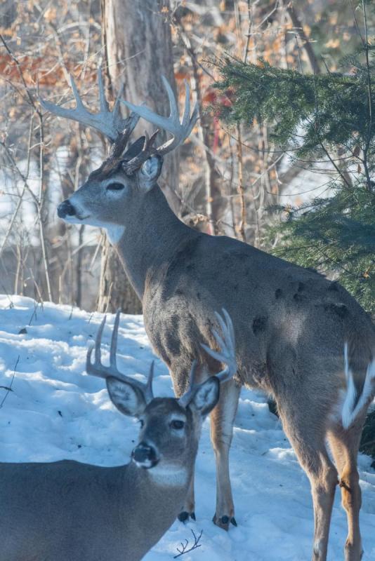Deer 012 Share.jpg