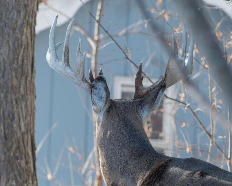 Deer 015 Share.jpg