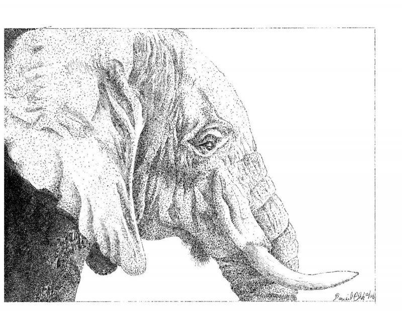 elephanthead.jpg