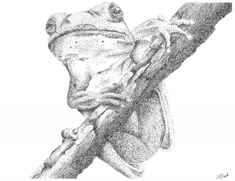 frogperchedontree.jpg