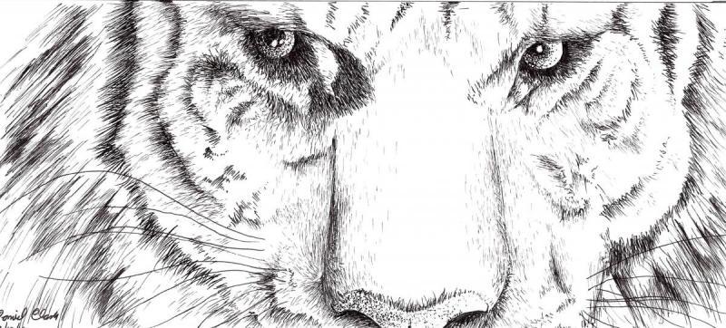tigereyes.jpg