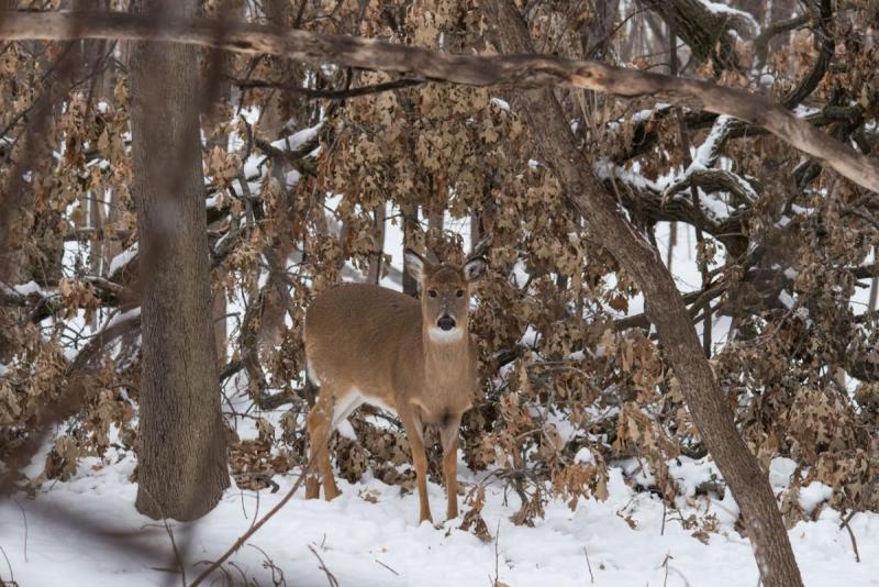186365440_Deer071Share.thumb.jpg.7c92441bae1afc9f7647541087e16e18.jpg